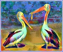 Pelicans In color